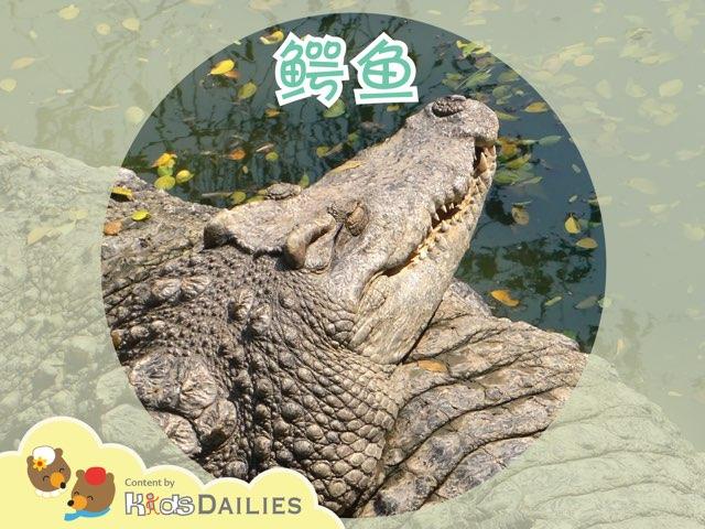 鳄鱼 by Kids Dailies