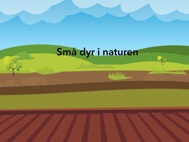 Små Dyr I Naturen by Michael Keldebæk