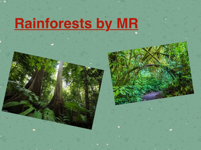 Rainforests By MR by Holy Spirit