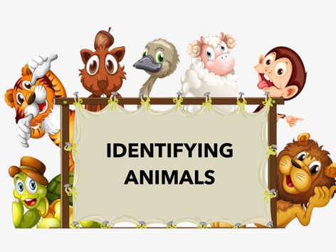 Identifying Animals by Teresa Grimes