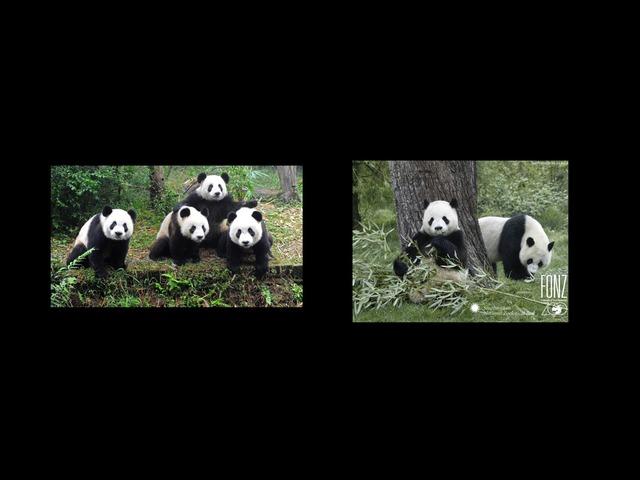 Panda Wil Een Vriendje. Meeste, Minste. by jole gielen