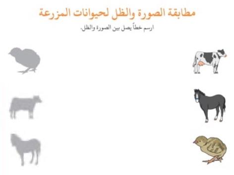 حيوانات ونباتات by Anayed Alsaeed