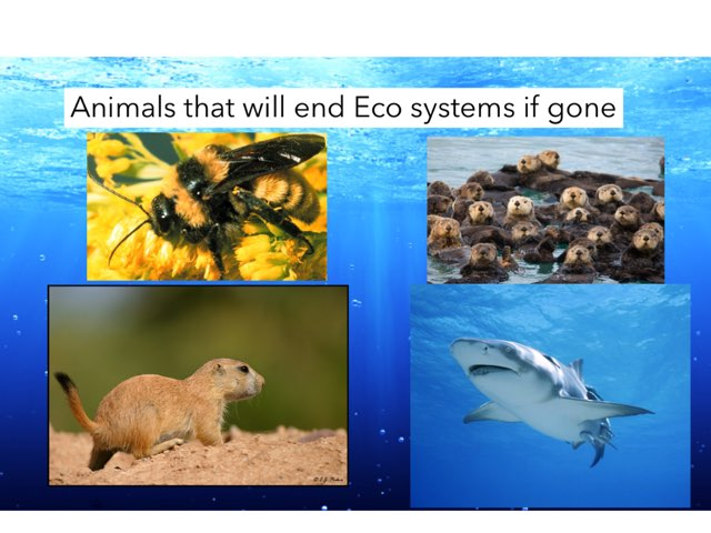 Ecosystems by Jane Miller _ Staff - FuquayVarinaE