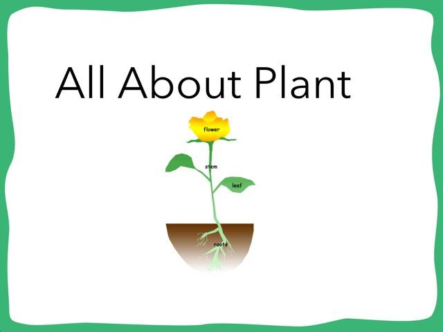 Eian Plants by Hulstrom 1st Grade
