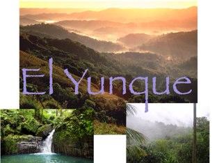 El Yunque by Silvia Zaragoza