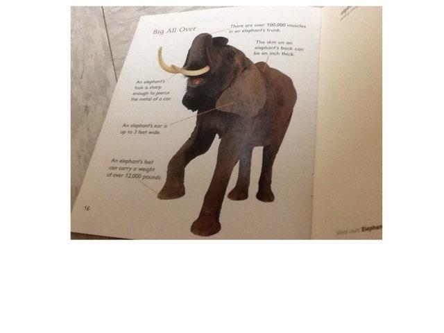 Elephants By Eli  by Keegan scelia