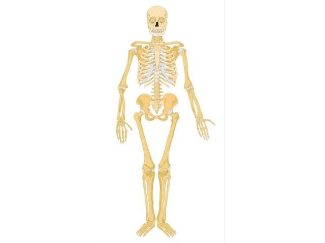 Ellie Skeleton by Mr Parkinson