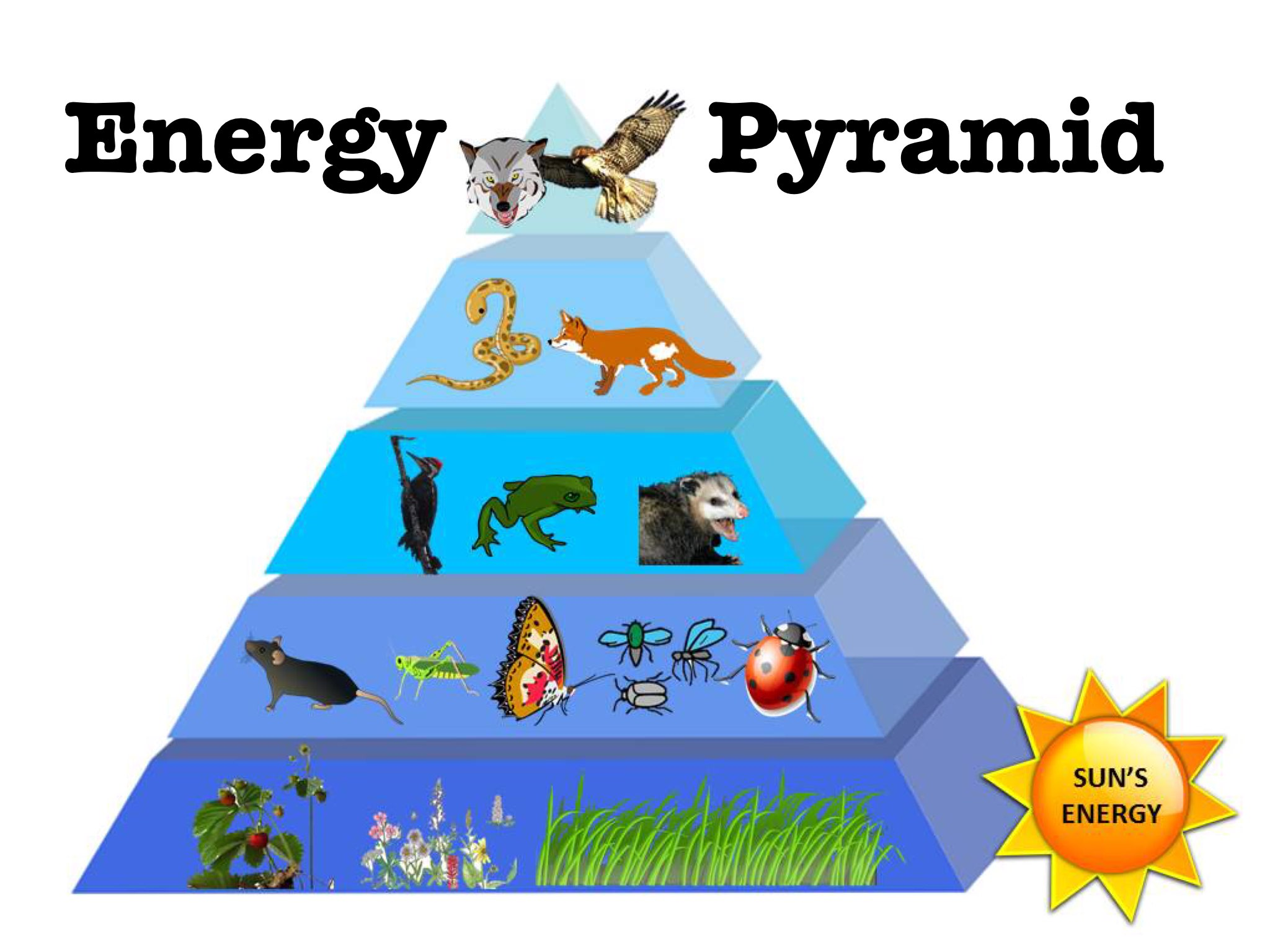 Energy Pyramid DPISD by Rachelle Corry - Educational Games