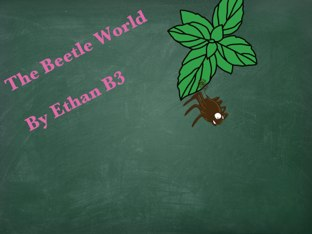 Ethan's Beetle Project by Vv Henneberg