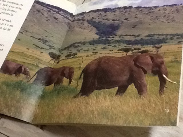 Evan-elephants by Keegan scelia