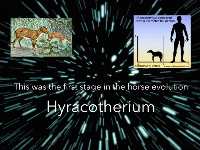 Evolution Of The Horse By Evie And Matilda by Y6F Y6F