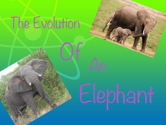 Evolution by Y6F Y6F