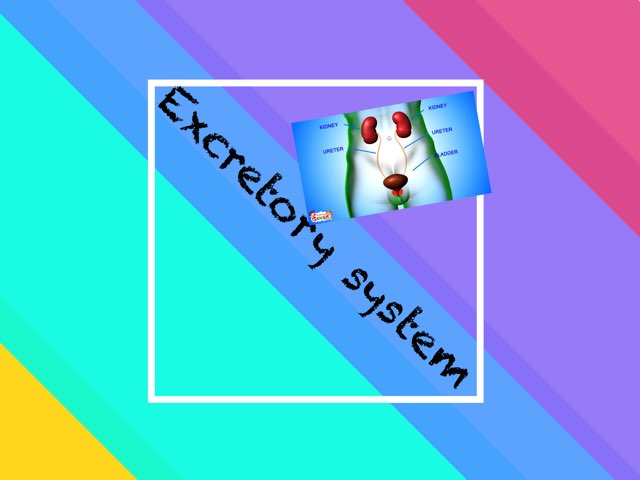 Excretory System  by Pepita De Los Palotes