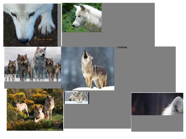 Les Loups Trop Chou by Lou