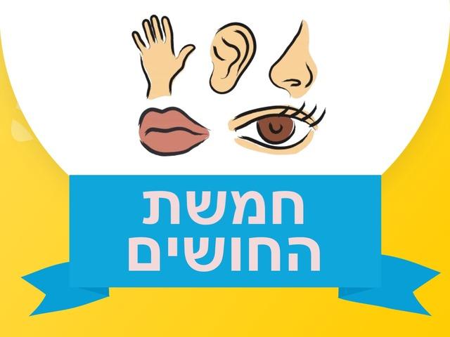 חמשת החושים by Uvi Cohen Rubinstein