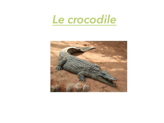 Le Crocodile by Gaelle Dbt