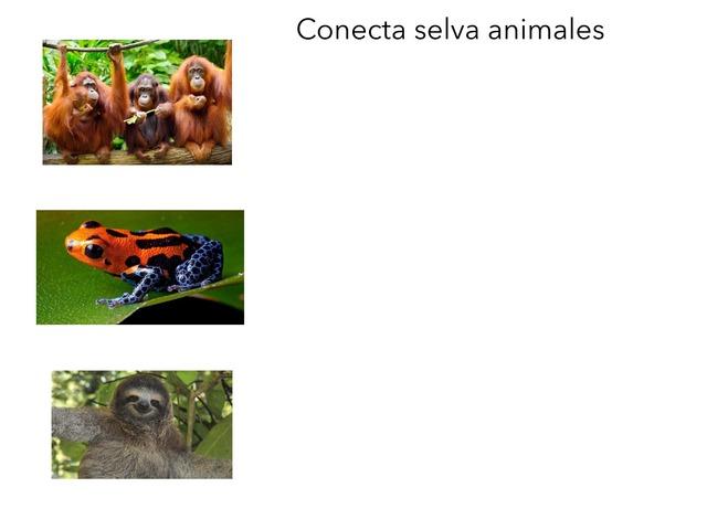 Animales Gonzalo by Esperanza Meli