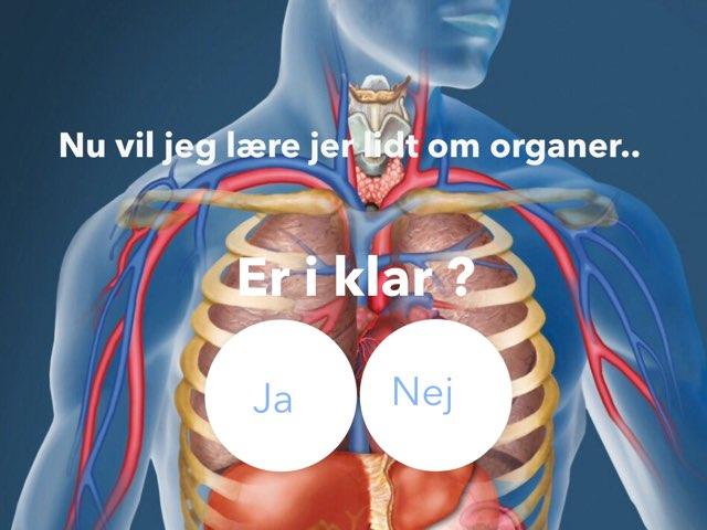 Organerne I Kroppen by Stine Møller