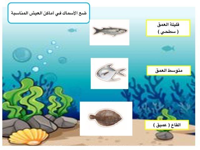 أشكال الأسماك by abla ohoud
