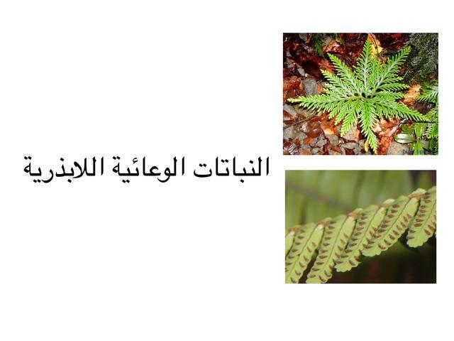 النباتات الوعائية اللابذرية by احمد كريري