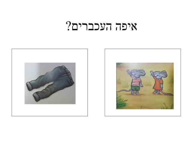 הענק הכי גנדרן  by keshatot keshatot