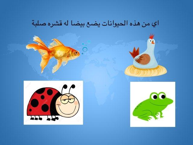 لعبة 30 by Fatma Almoosa