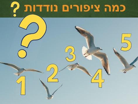 סתיו- מניית ציפורים נודדות by Meital Daniel