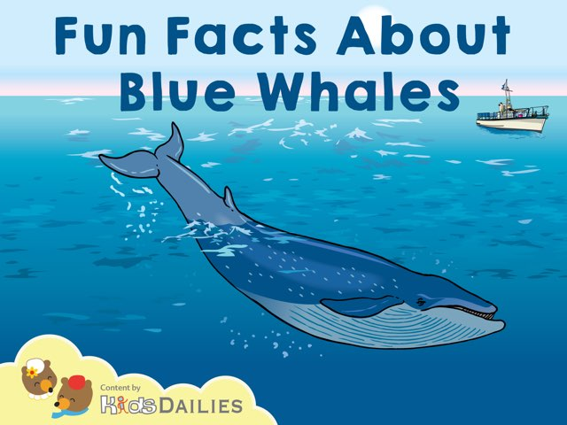 Fun Facts About Blue Whales by Kids Dailies