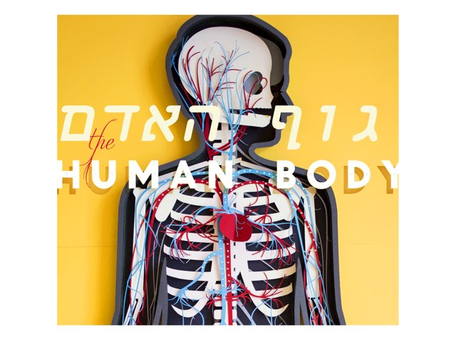 גוף האדם by Ira Vaknin