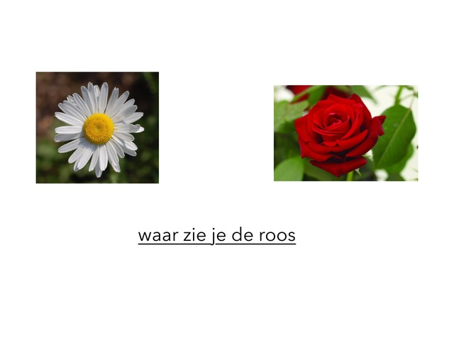 waar zie je de roos by Annemarie