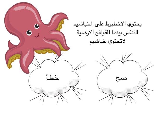 عاشر رخويات  by Shaimaa Mohammed