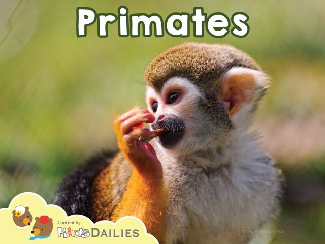Primates by Kids Dailies