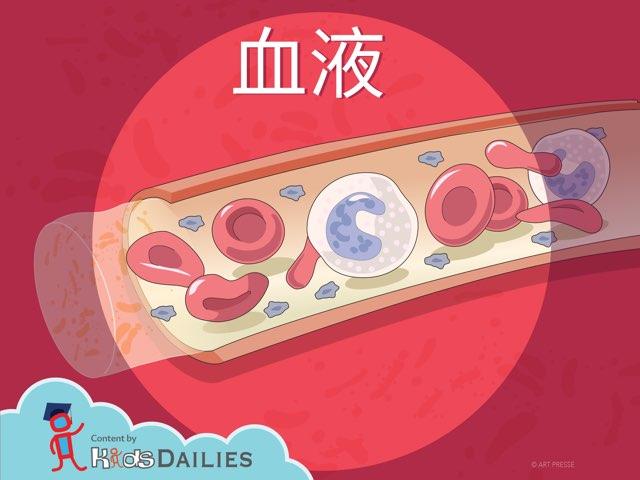 關於血液的小常識 by Kids Dailies