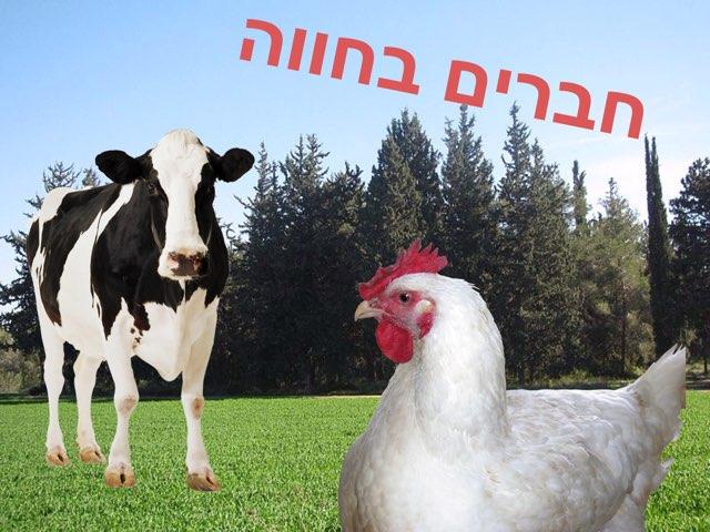 חברים בחווה by Tal Michalovici
