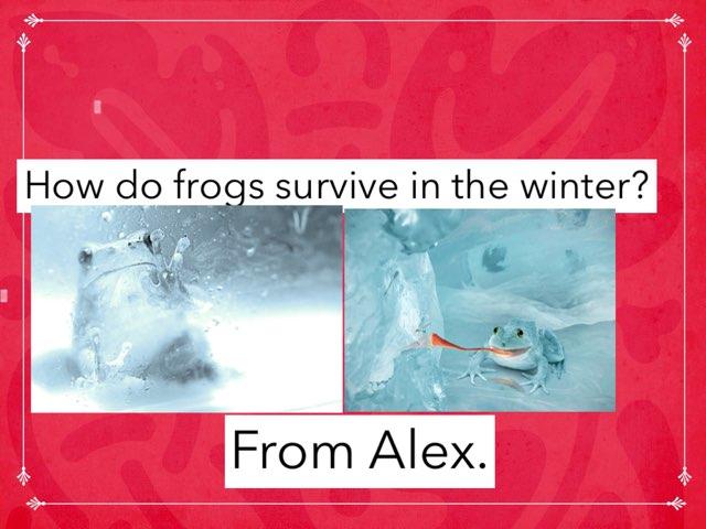 Frozen Frogs by Jane Miller _ Staff - FuquayVarinaE