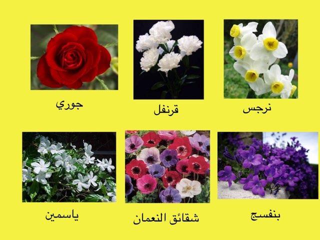 لعبة ثروة لغوية الأزهار والأطفال by Mahed Altarsha