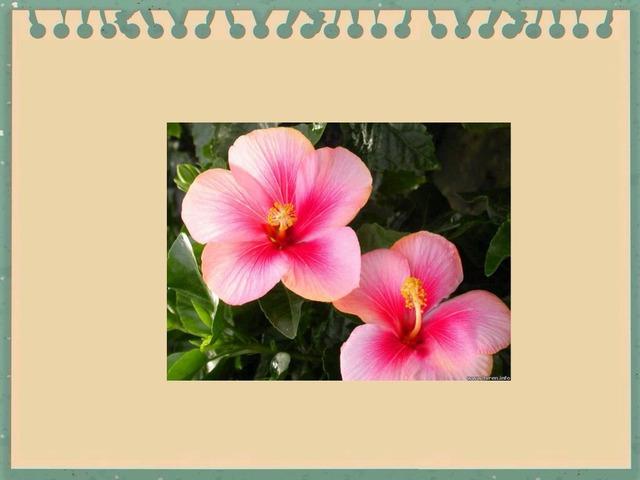 Flower by Hana Tender
