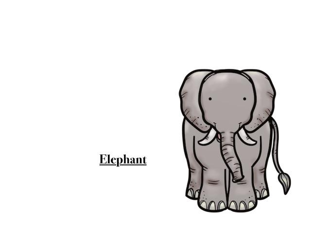 Animal by Nawal Almutairi