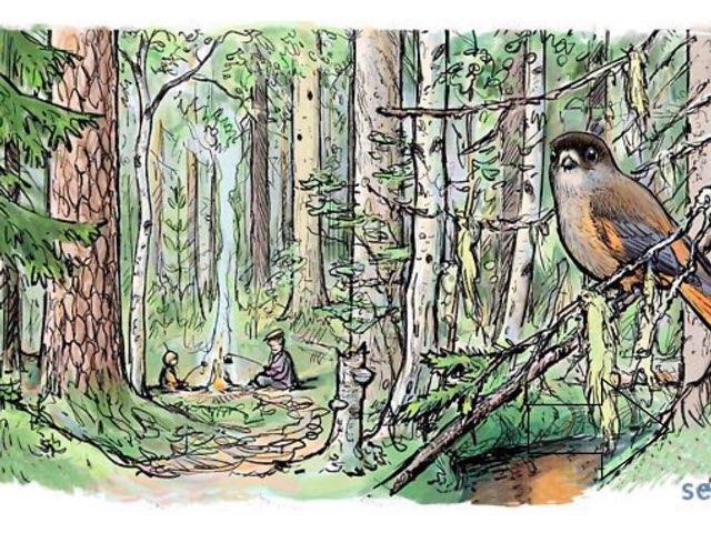Metsä by Miira Pitkänen