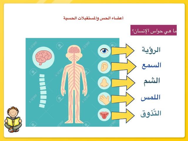 المستقبلات الحسية by aisha90 91