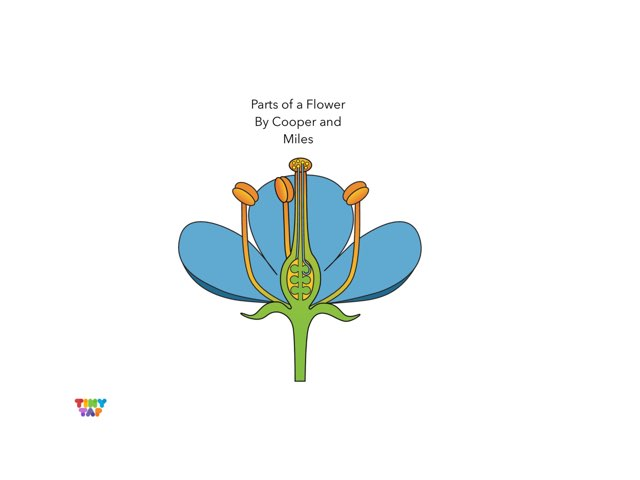 Cooper & Miles' Flower Parts by Ashley Shaw