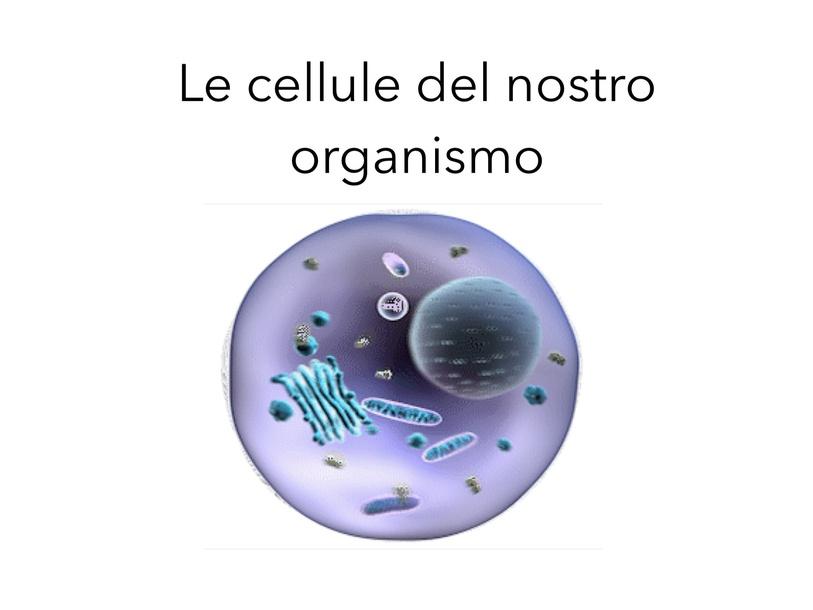 LE CELLULE DEL NOSTRO ORGANISMO  by Alessandra