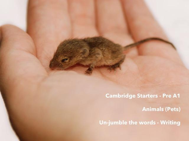 Animals Pets - Un-jumble the words - Writing  - Cambridge Starters Pre A1 ESL EFL EAL by Teeny Tiny TEFL
