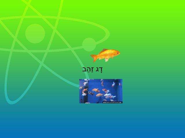 משחק 58 by נהרה אפשטין