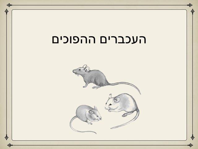 העכברים ההפוכים- פרקטיקום by מכללה תלפיות