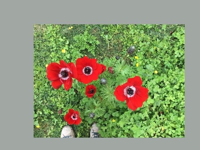 מעגל הפרח by תמר גיל גרדי