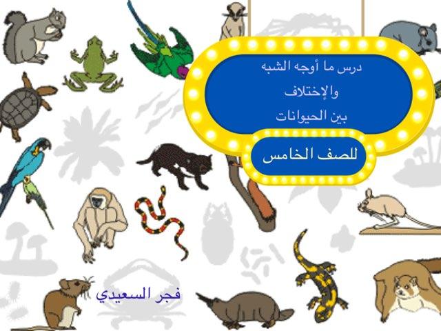 درس ما أوجه الشبه والاختلاف بين الحيوانات by Fajer Alsaeedi