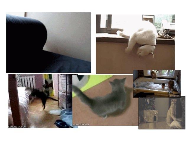 Funny Cat Coladge by Seth Vizel