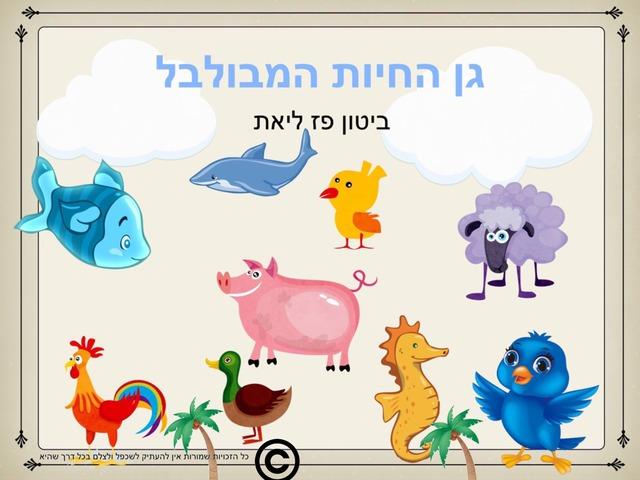 גן החיות המבולבל by Liat Bitton-paz
