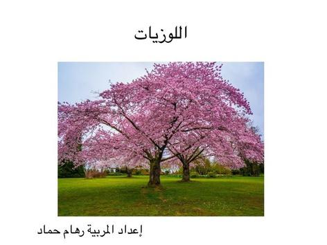 اللوزيات by riham hammad